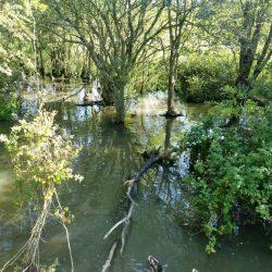 Wrafton Pond Braunton